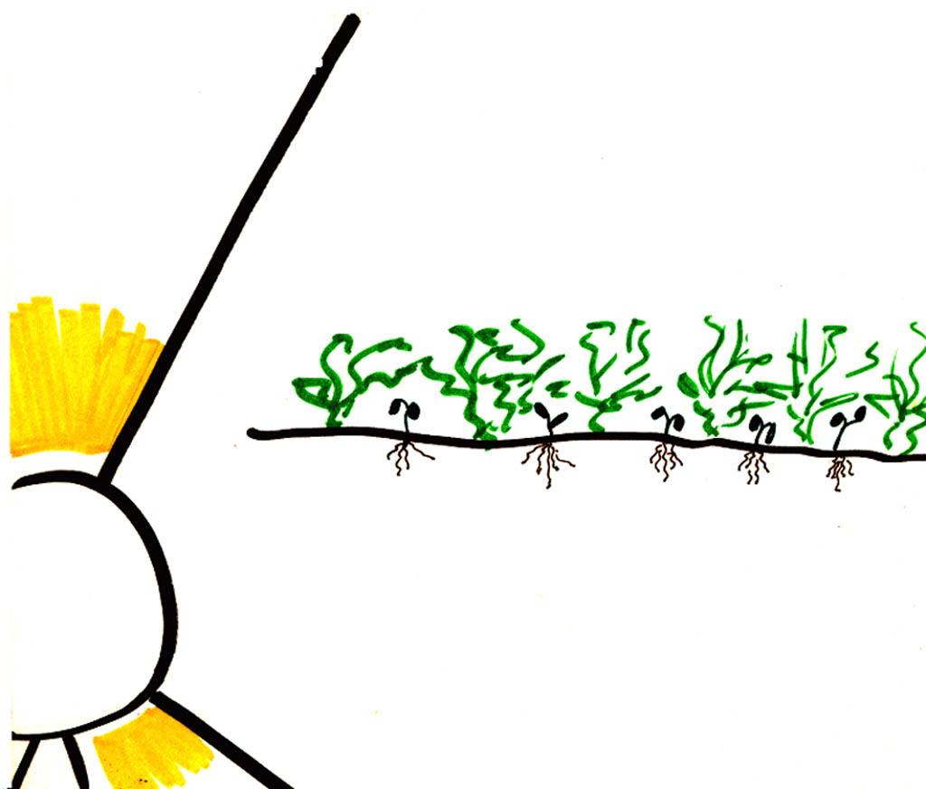 parable of the sower verson 2 flip chart ebibleteacher